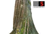 Kora drzewa dżungli 8K 3d model