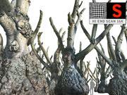 Ogromne drzewo dżungli 16 tys 3d model