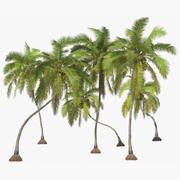 Coconut Trees 3d model