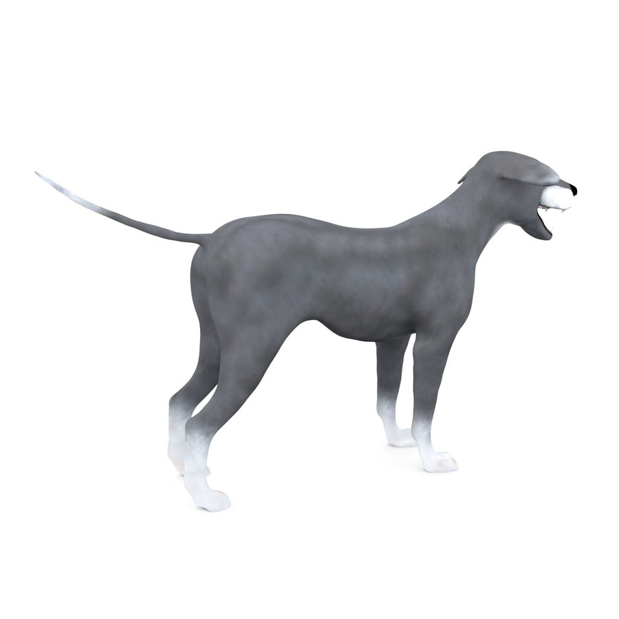 Greyhound Character royalty-free 3d model - Preview no. 7