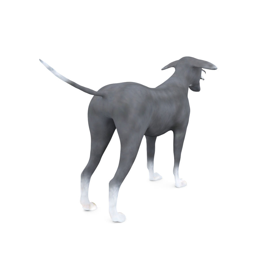 Greyhound Character royalty-free 3d model - Preview no. 6