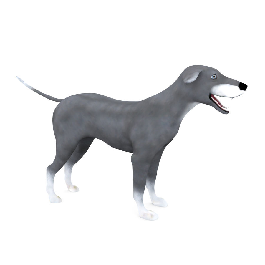 Greyhound Character royalty-free 3d model - Preview no. 8