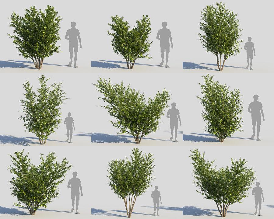 Coleção de sebes e arbustos (10 em 1) royalty-free 3d model - Preview no. 18