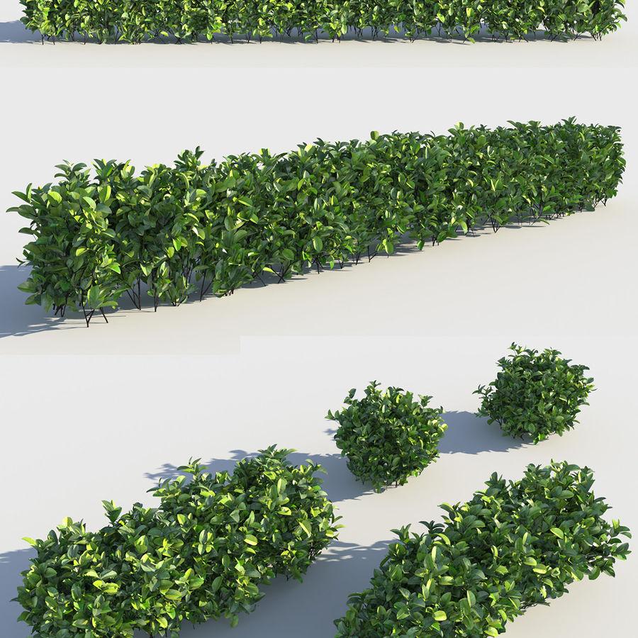 Coleção de sebes e arbustos (10 em 1) royalty-free 3d model - Preview no. 13