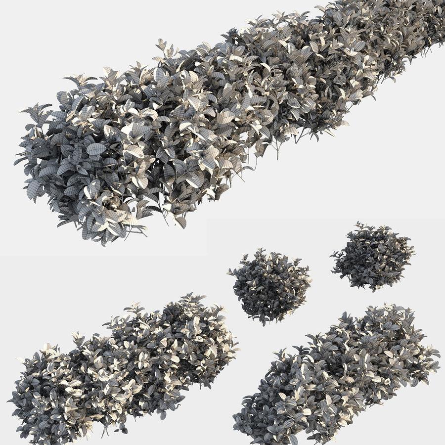 Coleção de sebes e arbustos (10 em 1) royalty-free 3d model - Preview no. 15