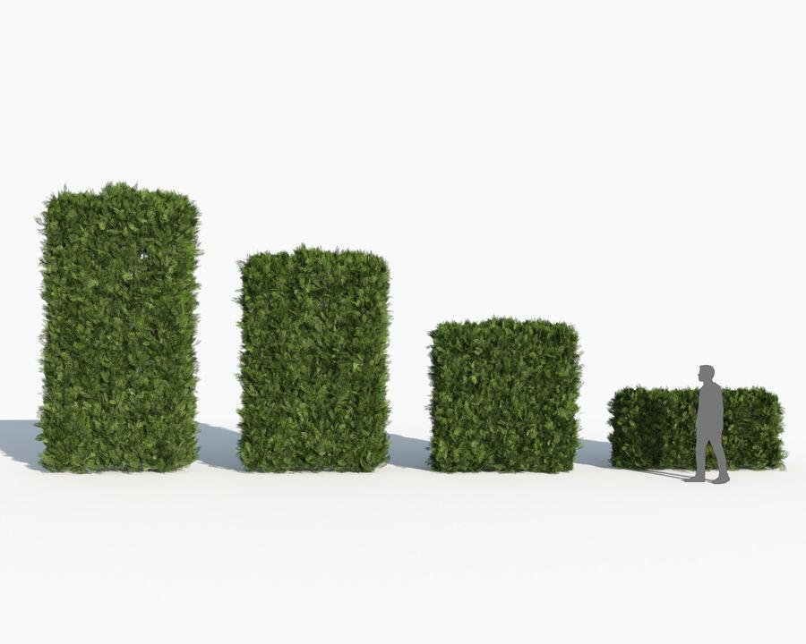 Coleção de sebes e arbustos (10 em 1) royalty-free 3d model - Preview no. 36