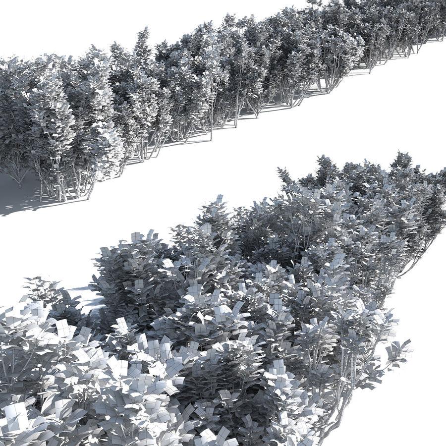 Coleção de sebes e arbustos (10 em 1) royalty-free 3d model - Preview no. 34