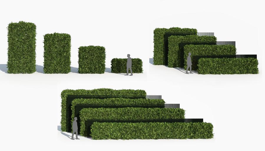 Coleção de sebes e arbustos (10 em 1) royalty-free 3d model - Preview no. 35