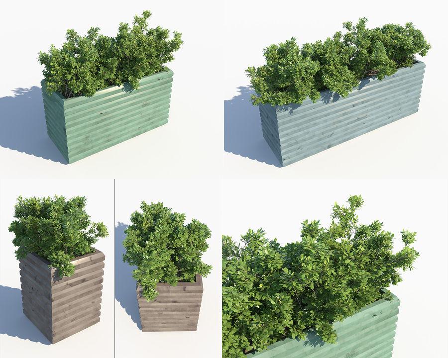Coleção de sebes e arbustos (10 em 1) royalty-free 3d model - Preview no. 16