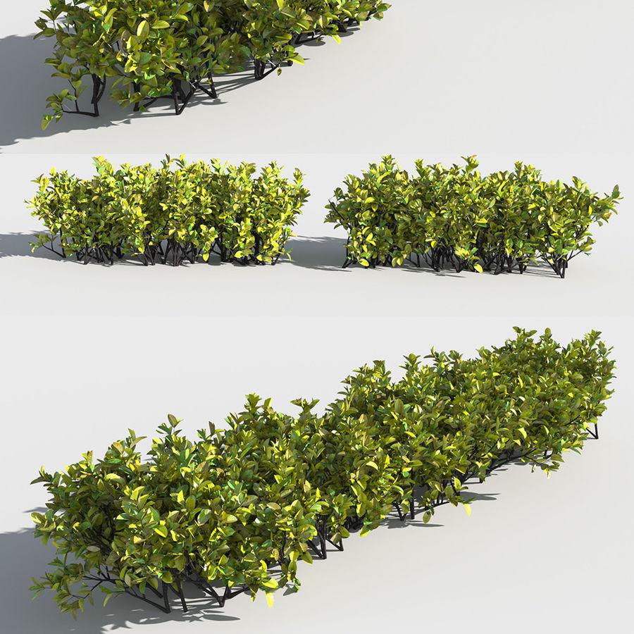 Coleção de sebes e arbustos (10 em 1) royalty-free 3d model - Preview no. 20