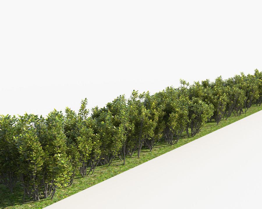 Coleção de sebes e arbustos (10 em 1) royalty-free 3d model - Preview no. 31