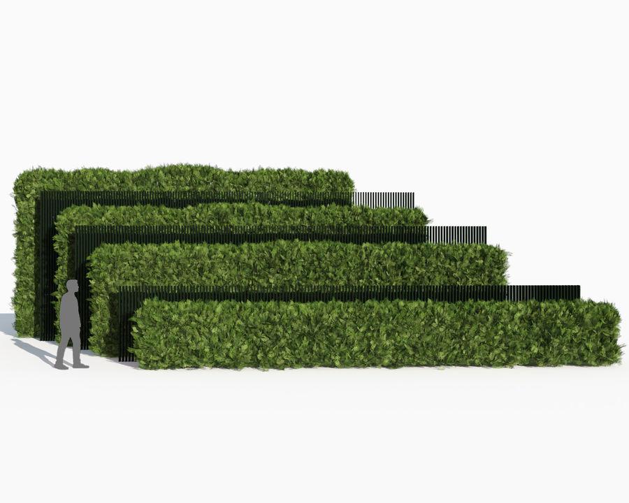 Coleção de sebes e arbustos (10 em 1) royalty-free 3d model - Preview no. 38