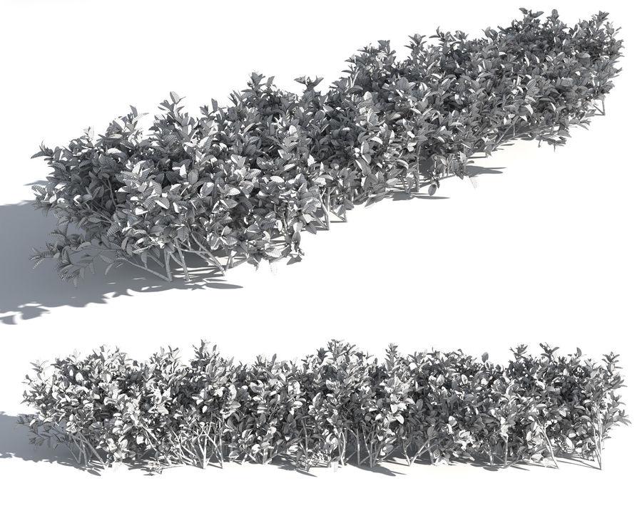 Coleção de sebes e arbustos (10 em 1) royalty-free 3d model - Preview no. 22