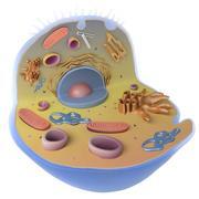 細胞 3d model