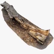 썩은 나무 줄기 3d model