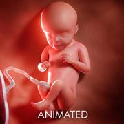 Semaine du fœtus 29 3d model