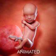 Semaine du fœtus 30 3d model