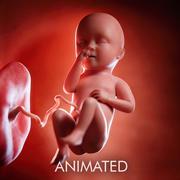 Semaine du fœtus 34 3d model