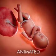 Fetus Week 40 3d model