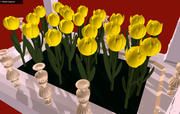 Fiori - Tulipani gialli in un'aiuola - Ti amo 3d model