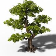 Büyük ağaç 3d model