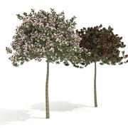 macieira everest 3d model