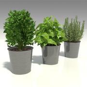 herbs in pots 3d model