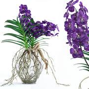 Orquídeas Vanda 3d model