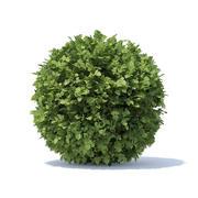 Spherical Hedge 3d model