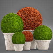 Topiary bush Buxus 3d model