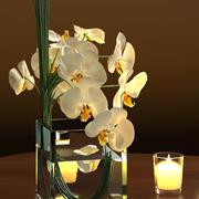 White Orchids in Square Vase 3d model
