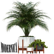 Plants collection 68 Modernica pots 3d model