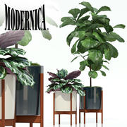 Plants collection 69 Modernica pots 3d model