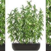 Árvores de bambu 3d model