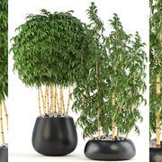 Árvores de bambu dourado 3d model