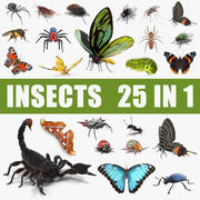 Insects Big 3D Models Collection 3d model