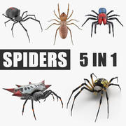 Spiders 3D Models Collection 3d model