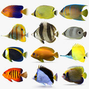Butterflyfish and Angelfish 3d model