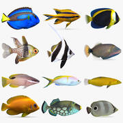 Reef Fish Collection 01 3d model