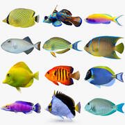 Reef Fish Collection 02 3d model