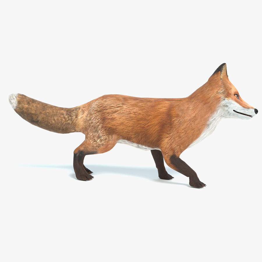 Fox Animated royalty-free 3d model - Preview no. 1