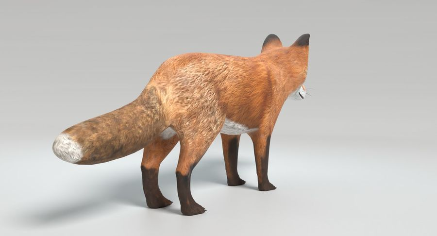 Fox Animated royalty-free 3d model - Preview no. 6