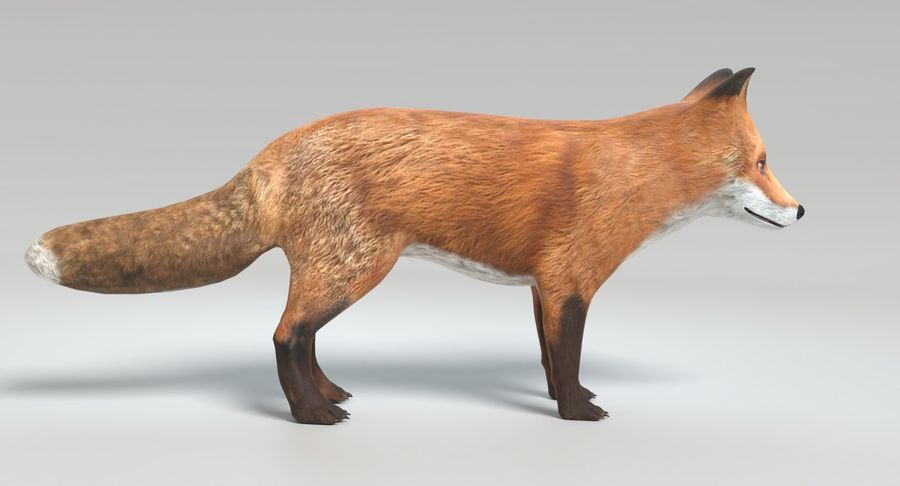 Fox Animated royalty-free 3d model - Preview no. 5
