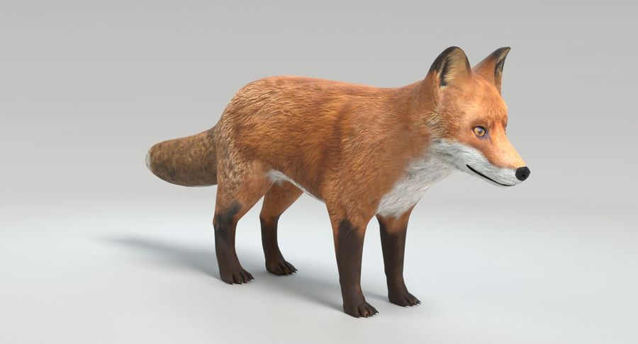Fox Animated royalty-free 3d model - Preview no. 4