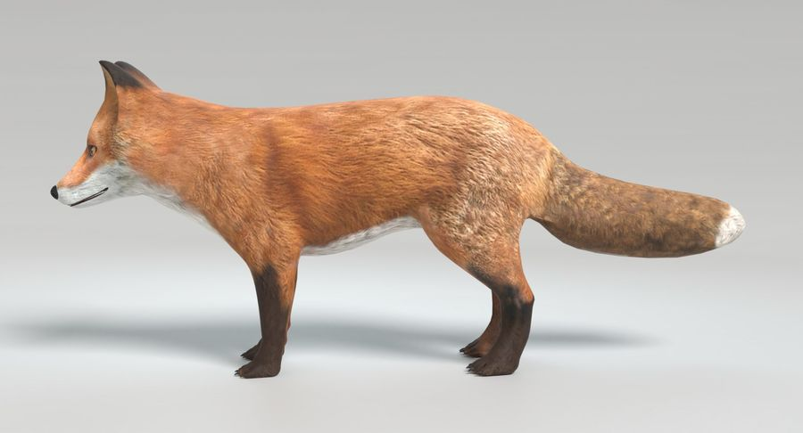 Fox Animated royalty-free 3d model - Preview no. 8