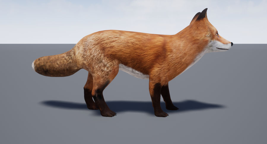 Fox Animated royalty-free 3d model - Preview no. 17