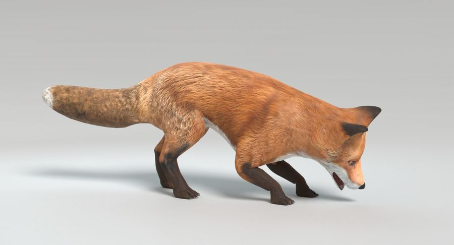 Fox Animated royalty-free 3d model - Preview no. 11