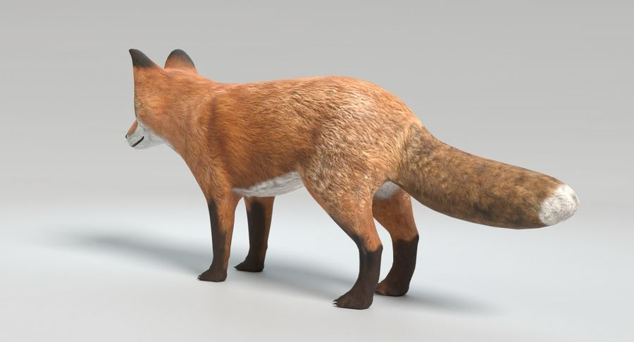 Fox Animated royalty-free 3d model - Preview no. 7
