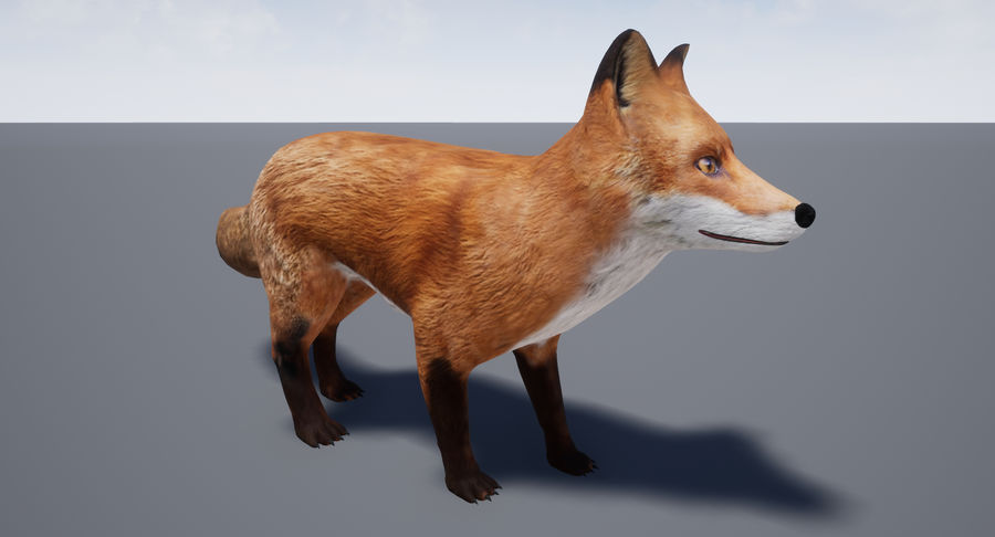 Fox Animated royalty-free 3d model - Preview no. 18