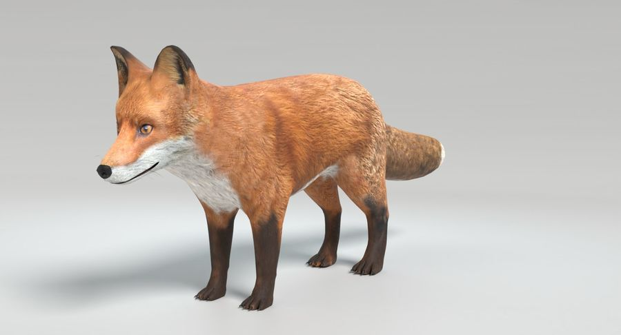 Fox Animated royalty-free 3d model - Preview no. 9